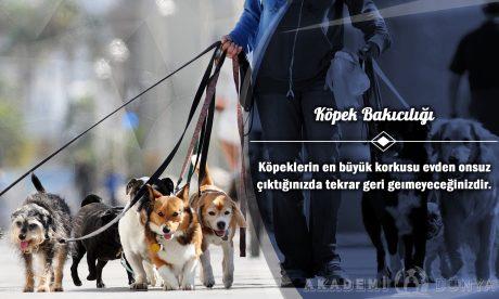 Köpek Bakıcılığı Ücretsiz Sertifikalı Eğitim